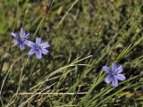 Mauve Flowers - Fleurs mauves