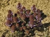Rocky Flowers - Fleurs rocaille