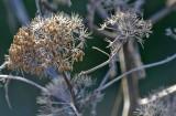 Wild dry flowers