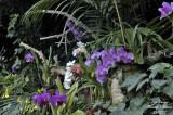 Orchid Garden in Loro Parque