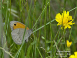 BUTTERFLIES OF EXTREMADURA