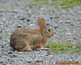 Rabbit 04761 copy.jpg