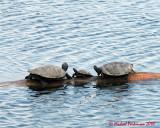 Turtles 03623 copy.jpg