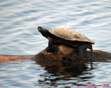 Turtles 03626 copy.jpg