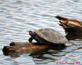 Turtles 03627 copy.jpg