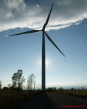 Wind Turbines 03868 copy.jpg