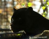 Zoo 09633.JPG