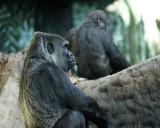 Zoo 09767.JPG