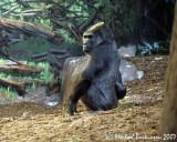 Zoo 09770.JPG