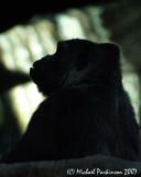Zoo 09772.JPG