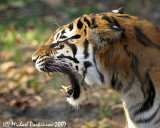 Zoo 09807.JPG