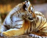 Zoo 09815.JPG