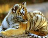 Zoo 09816.JPG