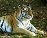Zoo 09818.JPG