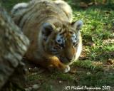 Zoo 09827.JPG