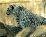 Zoo 09844.JPG