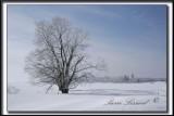_MG_4702a.jpg  -  LE SOLEIL ET LE CALME APRÈS UN BROUILLARD GLACÉ /  SUNNY AND CALME AFTER ICE FOG