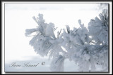 _MG_4780aa.jpg  -  NEIGE GIVRÉE APRÈS UN ÉPAIS BROUILLARD  / FROSTED SNOW AFTER   ICE FOG