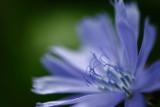 20090831 - Blue