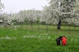 spring - lente - printemps