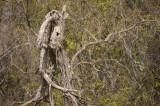 branches-tango