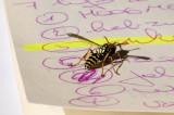 study 7 deadly sins exhibit