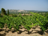 Fayence: Weinfeld / vineyard