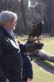 John and the harris hawk