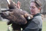 Eagle in love