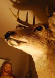 D.H. the Deer Head