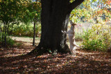 Treeing a Squirrel