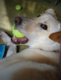 Tennis Ball Destroyer