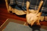 Fiona Goes Wild
