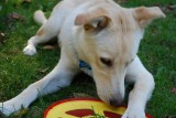 Frisbee Girl