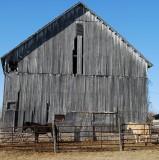 Horses and Faded Barn
