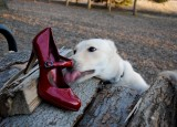 I Love Your Shoes
