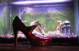 Red Shoe And Fishtank