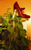 Red Shoe and Plant