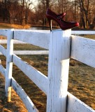 Red Shoe On Fence