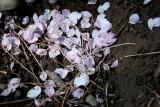 Petals In The Dirt