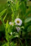 The Lowly Field Flower