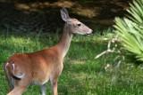Deer-0223