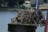 59TarponSprings Osprey nest-611