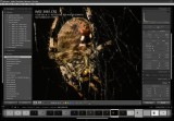 Lightroom 2 spider work