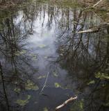 dark pond.jpg