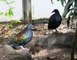 Unidetified Iridescent Bird