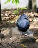 Unidetified Iridescent Bird 2
