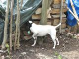 Checking Out the Wood Pile