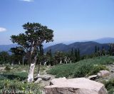 Mt. Evans Hill Climb & Durango Century