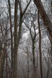 Mountain thru the trees